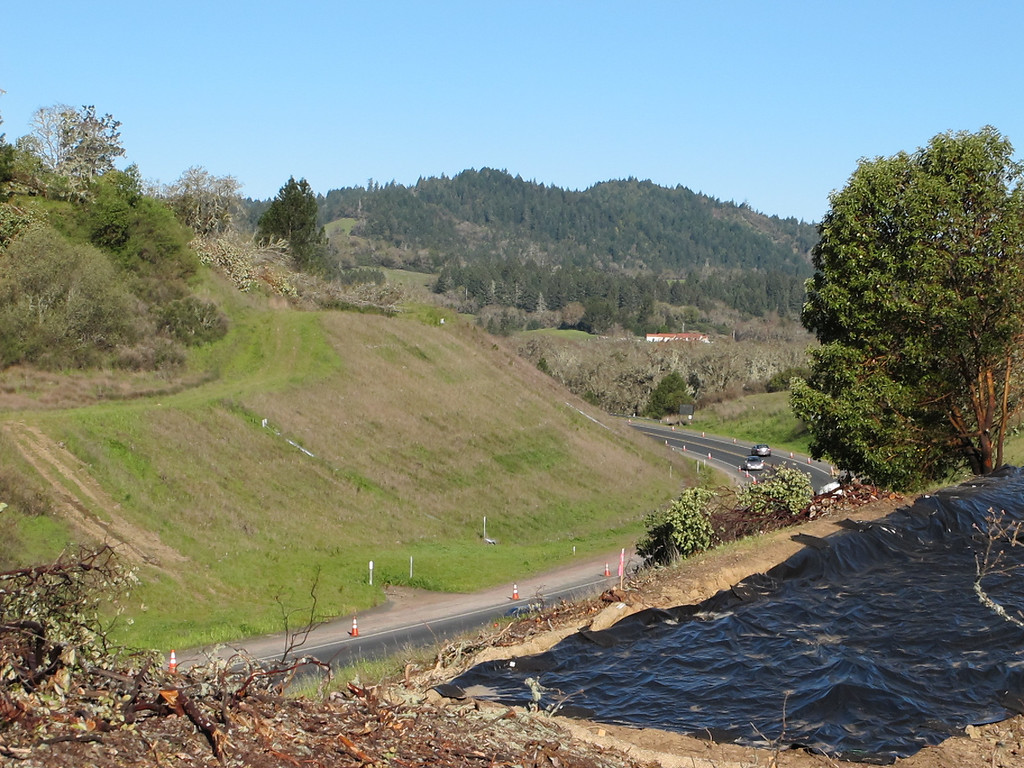 Description of . Overlooking Highway 101 not far from where the tree sitter