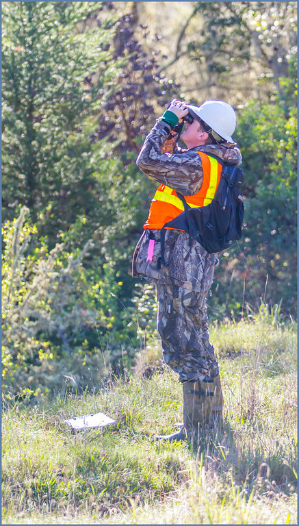 Description of . One of the CalTrans biologists looking for possible nesting birds.