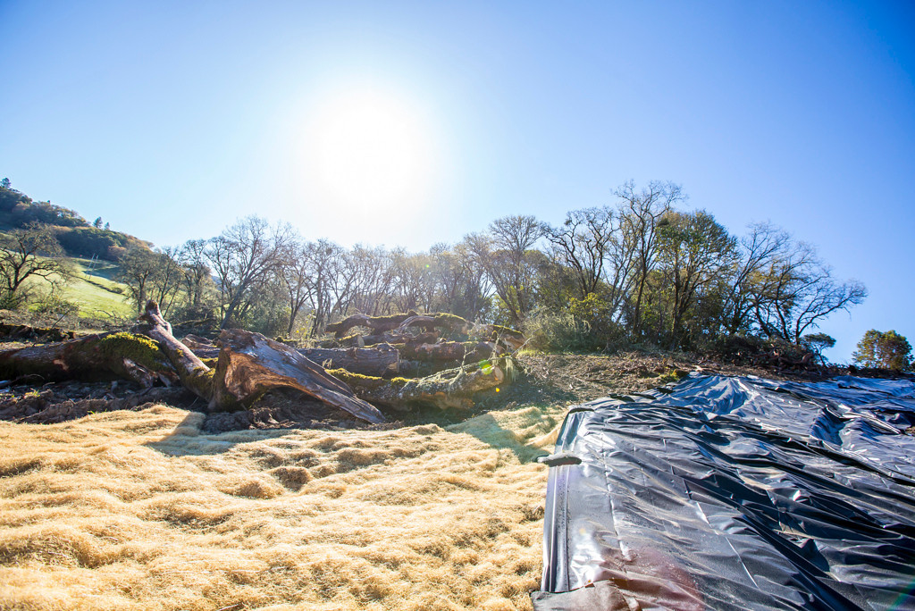 Description of . Tarp and straw cover used for erosion control.Photo by Steve Eberhard.