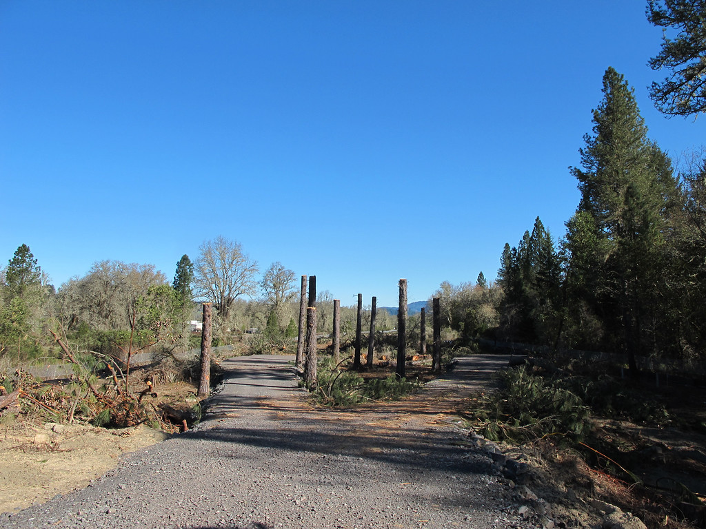 Description of . Roadway created by CalTrans to allow the CHP equipment access to this former grove of pine trees where two tree sitters and a cat had taken up residence. CHP used  this newly built roadway to provide access for their