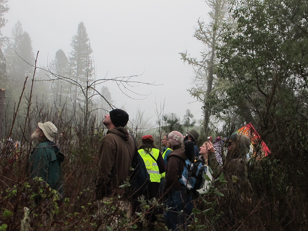 Description of . Shifting to the 2nd and 3rd tree sit locations. This crowd has gathered to watch. By The Willits News Publisher Debbie Clark