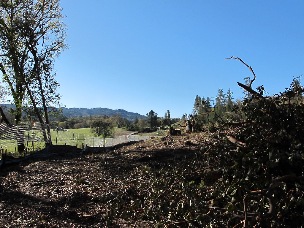 Description of . Trees cut along southeastern edge of the bypass roadway.