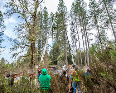 People stand on the sidelines watching the drama in the trees overhead. Photo by Steve Eberhard