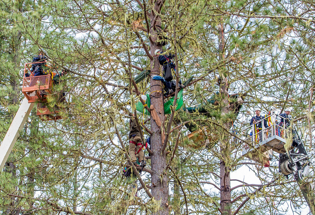. A CHP officer has rappelled down the tree from above toward Katz, who is also suspended in the tree. Photo by Steve Eberhard